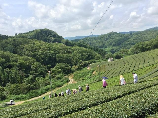 02茶園散策