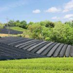 〜5月の南山城村〜緑色の茶畑が黒色へ